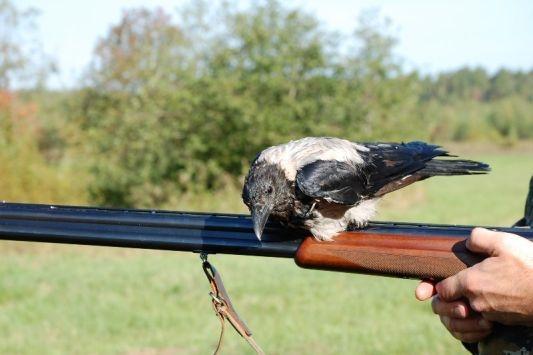 Стрелял по воронам - попал в человека
