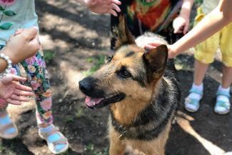 «Сразу поняла, что это «моя» собака»: шесть обитателей казанского приюта «Зооцентр» нашли себе дом