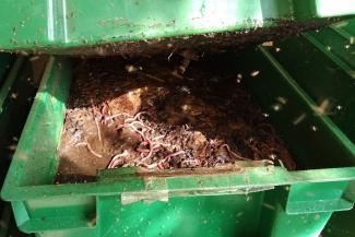 Экопродвинутые казанцы замораживают картофельные очистки и яблочные огрызки, чтобы сдать их на корм червям
