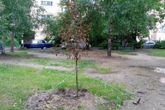 «Прошу не пожалеть ведра воды»: казанцев призвали поливать засыхающие деревья и «усыновлять» бездомных собак