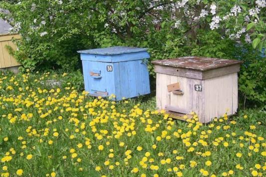 От пасечника требуют любить пчел больше, чем деньги