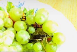 В Татарстане женщина требует от магазина полмиллиона за укус скорпиона, притаившегося в винограде