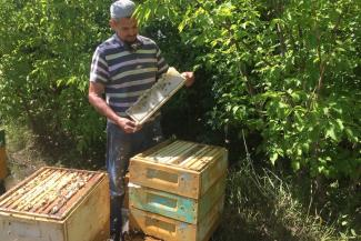 «Если они продолжат распылять химикаты, мы ляжем под трактор»: в Татарстане пчеловоды не могут найти управу на агрофирмы и фермеров