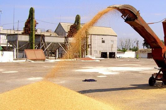 Фермеры могут разориться на экспорте зерна
