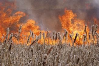 Красный Первомай в Татарстане: сгорел камыш, деревья уцелели
