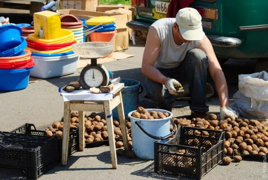 Чиновники обещают, что картошка подешевеет втрое