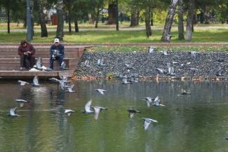 Голубей в казанском парке Урицкого убили бердхантеры или холода?