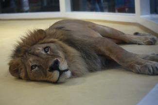 300 рублей и ноль эмоций: новый казанский зоопарк «Река Замбези» разочаровал посетителей