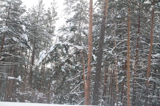 Лесные обитатели терпят голодомор