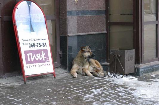 """Ну а если вас покусала """"пляжная"""" собака, насчет справок заморачиваться не придется"""