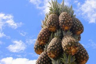 «И на юга ездить не надо!»: Татарстан заманивает туристов ананасами и оленьими боями