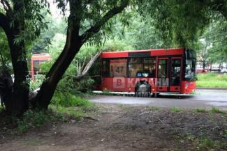 Падающими на людей и машины деревьями в Казани заинтересовалось следствие