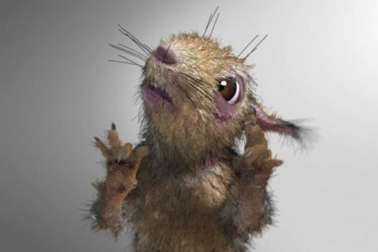 Охотник на мышей попал в больницу