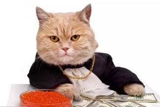 Казанская фирма ищет кота для работы «мордой компании»