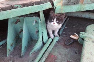 Вернись, Васька!.. В Татарстане ищут кота, упавшего с сухогруза в Каму и выплывшего на берег