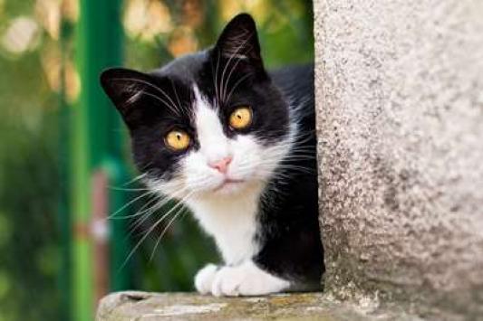 Ставить капканы на котов на казанском оборонном заводе считают нецелесообразным