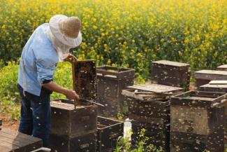 «Цель у них простая - убить пчеловодство»: пасечники в Татарстане взбунтовались против драконовских ветеринарных правил