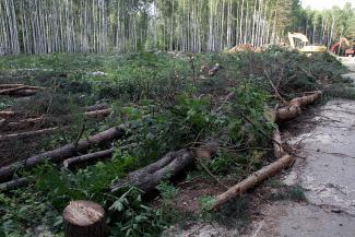 Лучшее — детям: в Казани пустили под топор 369 деревьев ради строительства школьного стадиона