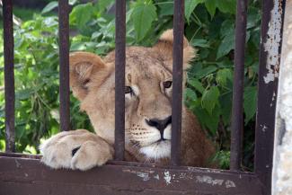 Цариц зверей казанскому зоопарку подарил старый знакомый