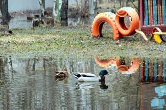 Птичье новоселье в Казани: утки в детсаду и воробьи в скворечниках
