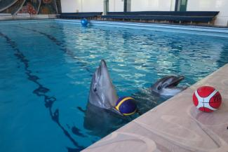 Казанский дельфин Ирбис не верит в победу России над Египтом на ЧМ-2018