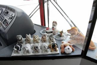 Китайские собачки в казанском автобусе встречают свой Новый год