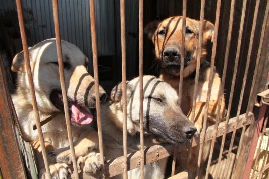 Приют закрыть, собак-инвалидов - вывезти