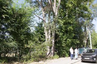 В Казани сотнями валят здоровые деревья, но не могут снести аварийный тополь