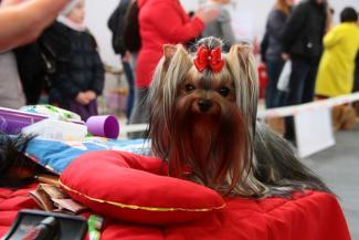 Все породы – в Казани: любимцы королевы Елизаветы II и собаки Сталина