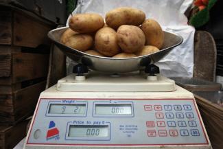 Зарплату учителей в Татарстане измерили в картошке