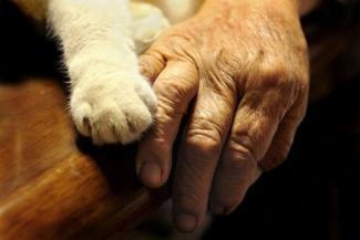 «Залечили мою Лушу!»: в Казани старушка обвиняет ветеринаров в смерти любимой кошки