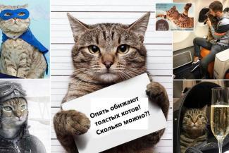 Гроза авиакомпаний кот Виктор едет в Казань на поезде