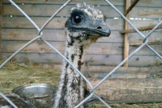 В трогательных зоопарках Казани работают звери-нелегалы