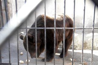 «Силу он свою знал, но не злобствовал»: после смерти медведя Кучума в казанском зоопарке осталось двое долгожителей