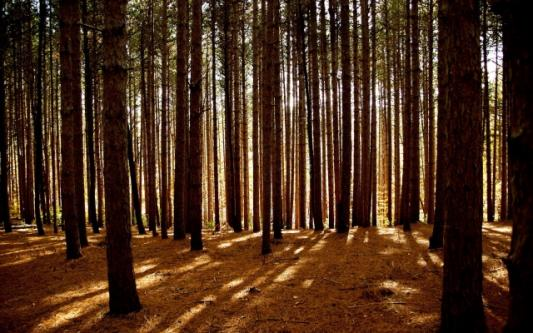 В УФАС рассказали, кому лесные участки достались вне конкурса