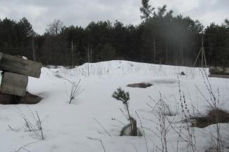 Минлесхоз Татарстана отказался от леса в пользу зятя министра