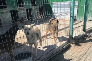Проверка показала: в казанской «усыпальнице» для бездомных собак животных убивают запрещенным ядом, а корма списывают без счета