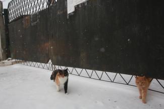 «Это больше похоже на концлагерь, чем на приют»: казанские зоозащитники натравили прокуратуру на службу отлова бездомных собак