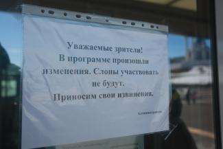 Шоу продолжается: разбушевавшаяся в Казанском цирке слониха едва не убила рабочего