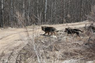«Мы же не в лесу живем!»: в Татарстане бродячие псы едва не загрызли насмерть сына прокурора