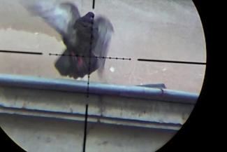«Он же совсем отмороженный!»: в Казани соседка бывшего помпрокурора, который устроил во дворе пальбу по голубям, заявила, что он хотел убить ее