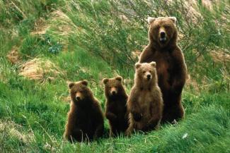 Медведи в Татарстане совсем обурели