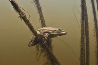 Лесные нимфы и лягушки на ходулях принесли фотографам из Татарстана всероссийскую известность