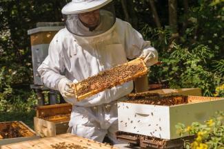 «В лесу - медведи, на полях - холдинги, у крестьян остались только пчёлы…»: пчеловоды Татарстана оплакивают своих отравленных кормилиц