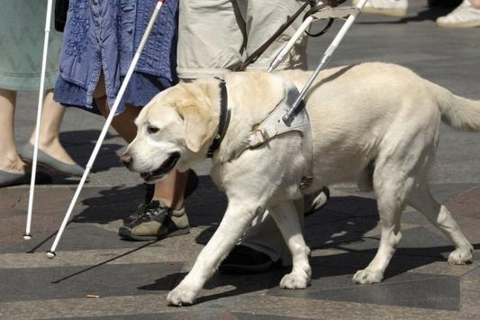 В Татарстане прокуратура отсудила у соцзащиты собаку-поводыря