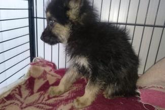 Депутаты Госсовета Татарстана решили помочь собачьим приютам, которых нет