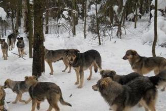 Дикие псы в лесах Татарстана пожирают зайцев и косуль