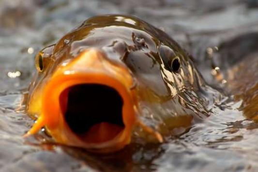 Ловить рыбку татарстанцы будут по новым правилам