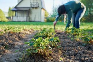 Новый закон разрешил казанским садоводам прописываться на дачах и запретил председателям СНТ отключать свет должникам