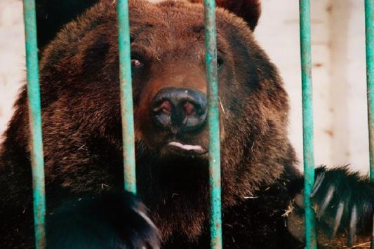 Брошенных в Татарстане 35 цирковых животных приютили на автобазе